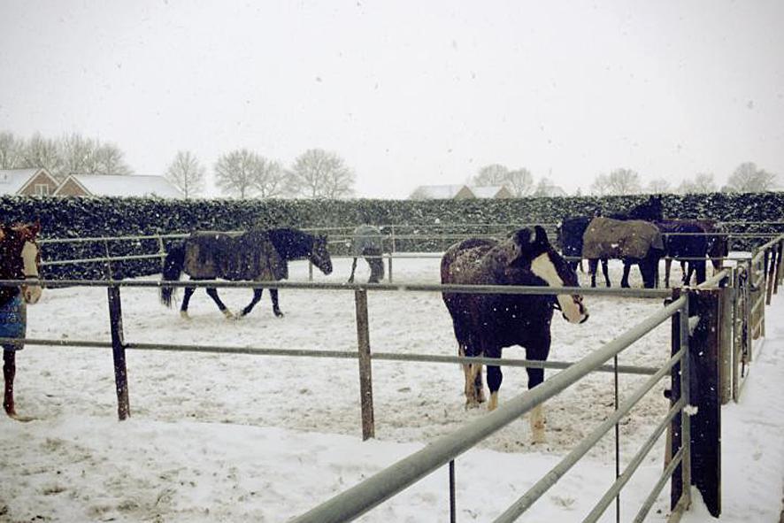 Wintertafreel